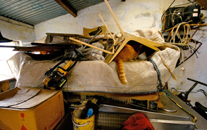 An Open Letter To Hoarder Neighbor Trying To Sell Your House