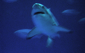 A Guide To Swimming With GreatWhites