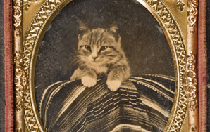 21 Pictures Of Cats Being Awesome Way Before The Internet Existed