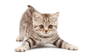 Quiz: Is This An Adorable Picture Of A Kitten Or A Racist Tweet AboutObama?