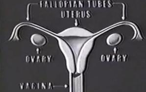 "Disney's ""The Story of Menstruation""Video"