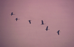 A Short Story About Birds