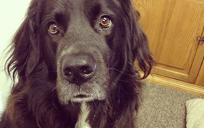 6 Things A Week of Dog Sitting Taught Me About Being AHuman