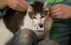 Here's Your Cat Video To End All CatVideos