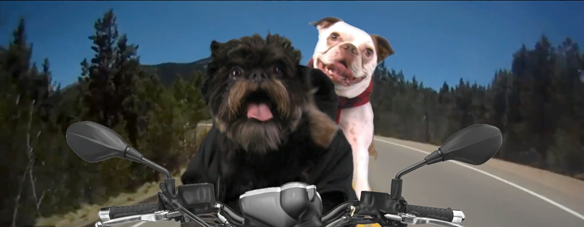 """Watch Hilarious Dog Version Of One Direction's """"Kiss You"""""""