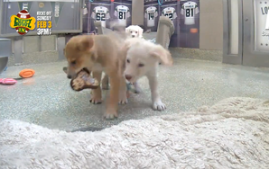 Here's Your Adorable Live Puppy Bowl Cam