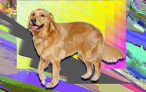 When I am a Dog I amBarking