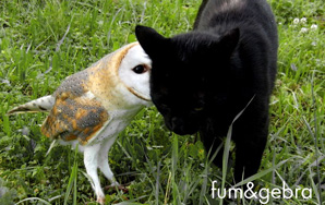 This Montage Of A Cat And Owl Playing Together Will Cure Your Hangover