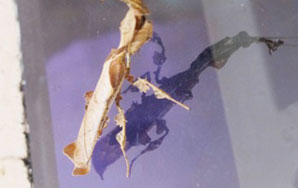 A Leaf-Insect Gets Existential With Heavy-Handed Metaphors