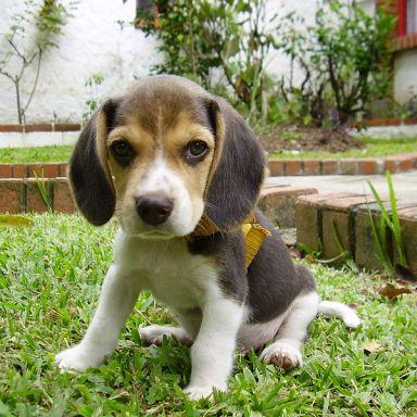 Descriptions Of Cute Puppies