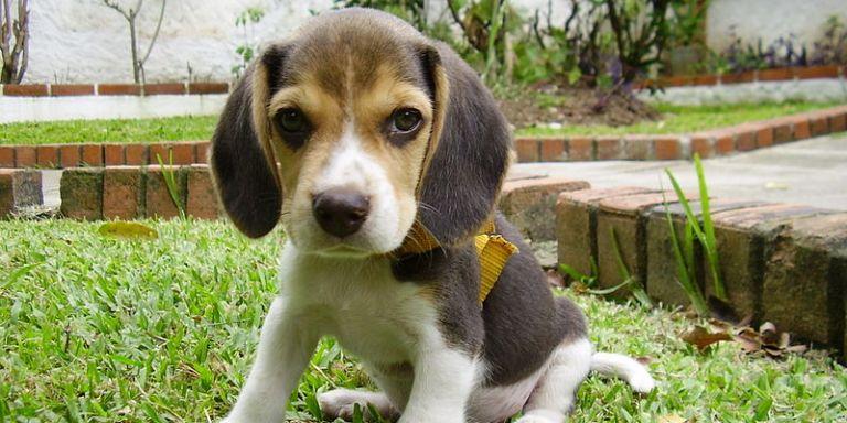 Descriptions Of CutePuppies
