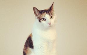 Cat Food Economics