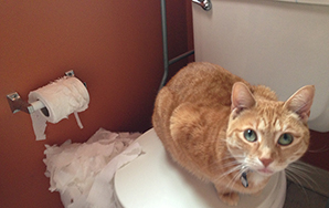 6 Indignities Every Cat Owner MustFace