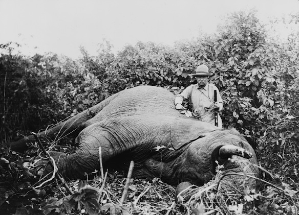 Roosevelt standing next to a dead elephant during a safari.
