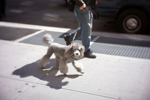 Willy, West Village