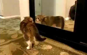 Here's Your Video Of Pets Freaking Out In Front OfMirrors