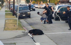 Disturbing Video Of A Dog Being Shot & Killed In An UnnecessarySituation