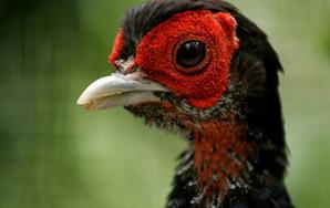 Birds, I Hate You: A FormalComplaint