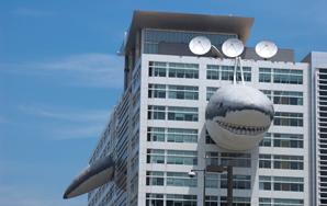 6 Things You Might've Missed On SharkWeek