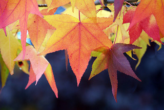 Autumn Is The Season Where Everyone Falls In Love