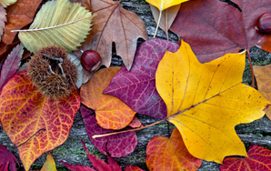 7 Glorious Feelings You'll Get To Experience Now That Fall IsComing