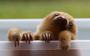 23 Signs Your Spirit Animal Is A Sloth