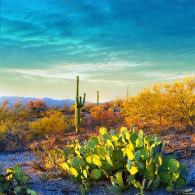 33 Signs You're From Arizona