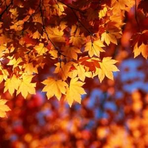 10 Ways You Know Autumn Is Your Season