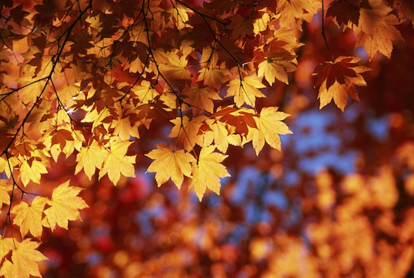 10 Ways You Know Autumn Is Your Season