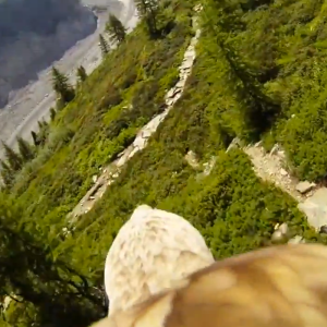 Watch This Sweet Video Of A GoPro Strapped To An Eagle So You Pretend You're On Its Back