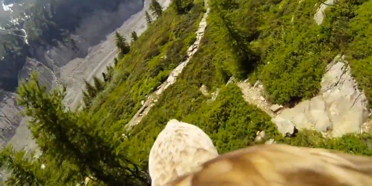 Watch This Sweet Video Of A GoPro Strapped To An Eagle So You Pretend You're On ItsBack