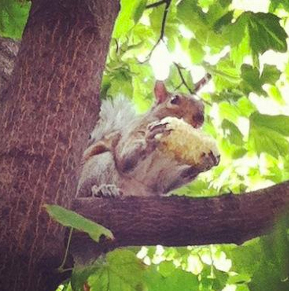 One time I saw a squirrel eating corn off the cob. ^____^