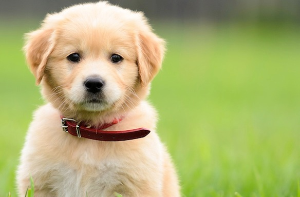 College Bro. Get A Puppy. Now. Like RightNow.