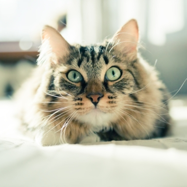 12 Life Lessons You've Learned From Your Cat