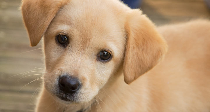 12 Life Lessons You've Learned From YourDog