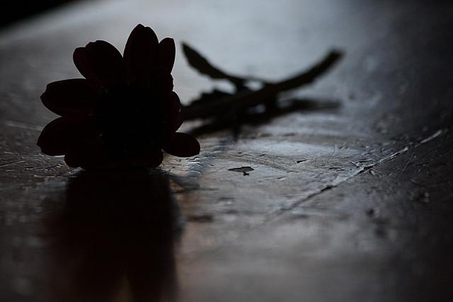 Nina Matthews Photography