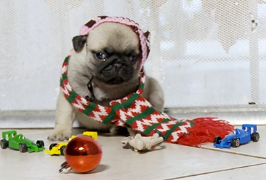 Home Alone Reenacted By Pug Puppies Is The Greatest Thing Ever On The Internet