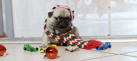 Home Alone Reenacted By Pug Puppies Is The Greatest Thing Ever On TheInternet