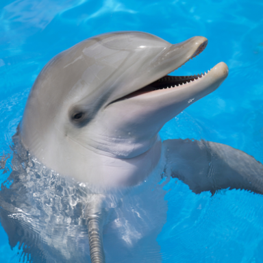 10 Things I've Learned From Working With Dolphins