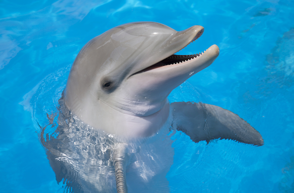 10 Things I've Learned From Working WithDolphins