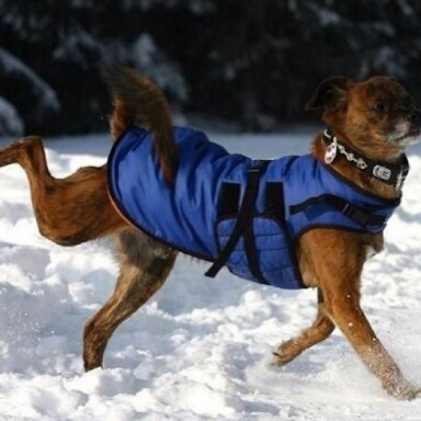 15 Reasons Why Your Dog Lives Better Than You