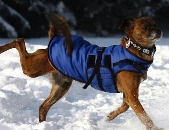 15 Reasons Why Your Dog Lives Better ThanYou