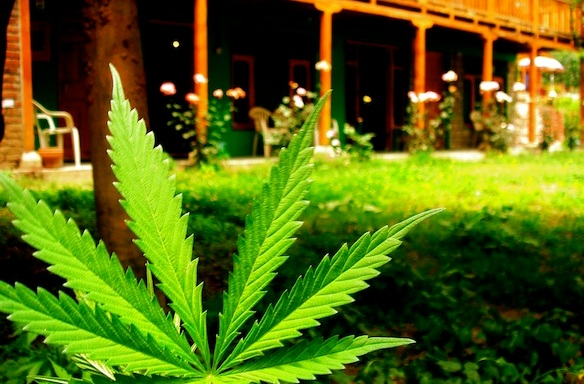 The 8 Biggest Misconceptions AboutWeed
