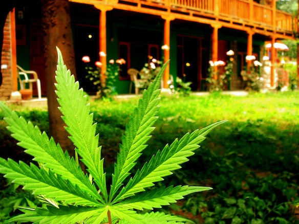 The 8 Biggest Misconceptions About Weed