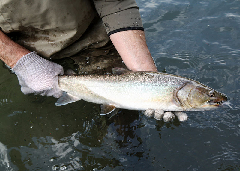 Oregon Department of Fish & Wildlife