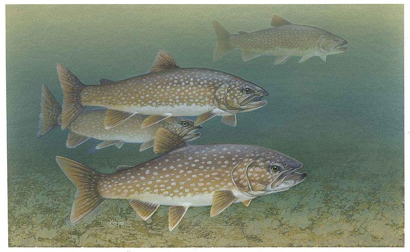 Knepp Timothy, U.S. Fish and Wildlife Service