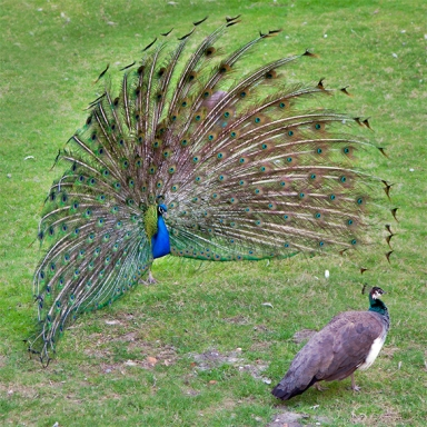 10 Animal Mating Rituals Human Dating Should Have