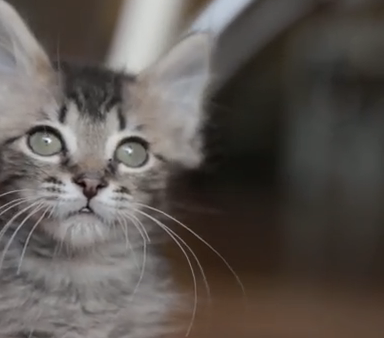 Watch This Reenactment Of HBO's Girls Performed By Kittens