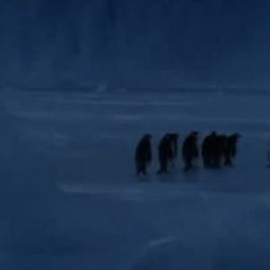 Whoa, The Noise Penguins Make When They Fall Down Is So… Satisfying