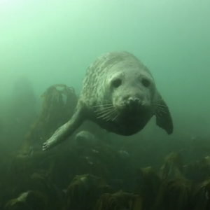 Watch These Lucky Divers Hang Out Underwater With These Friendly Seals